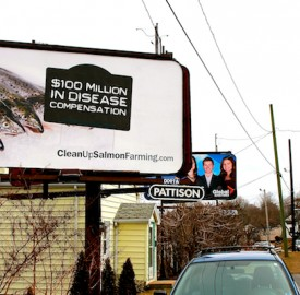 Billboards like this one in Halifax are drawing attention to unsustainable fish farming practices occurring in the Atlantic Ocean. Photo by Mike Bardsley.