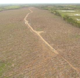clear cut near Rosaireville, Rogersville image #1-1