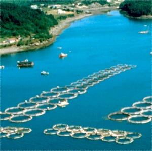 salmonfarms