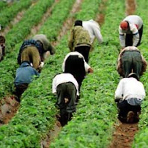 migrantworkersrex