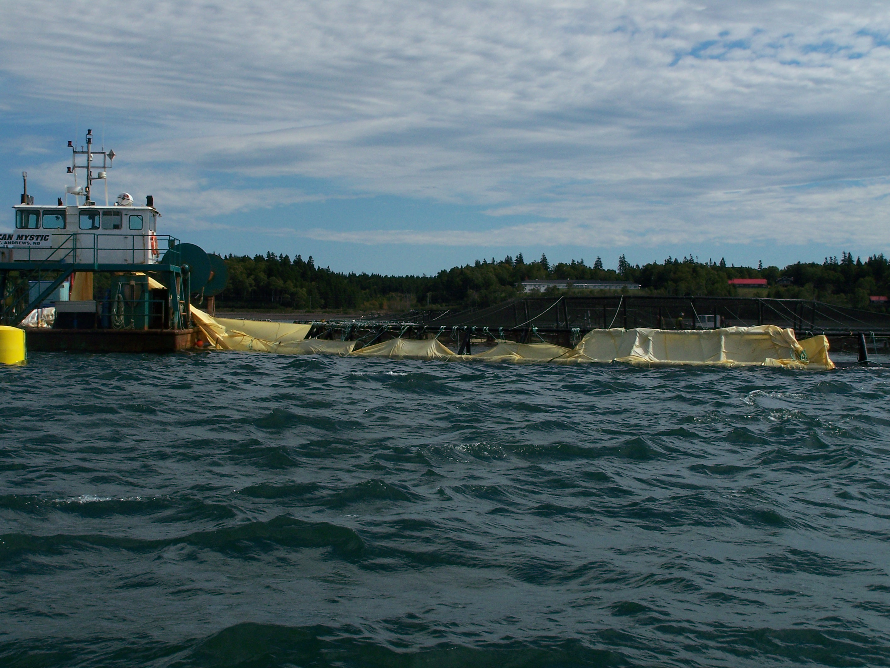 Tarps being placed around a salmon pen off Campobello Island. Tarps like these are used for some pesticide treatment on salmon farms. Photo - David Thompson
